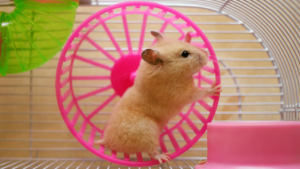 Orb Services Time Management Hamster on a Wheel